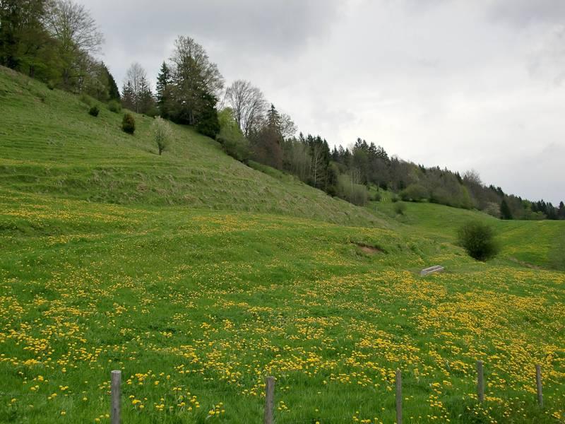 :Maiwiese im Allgäu